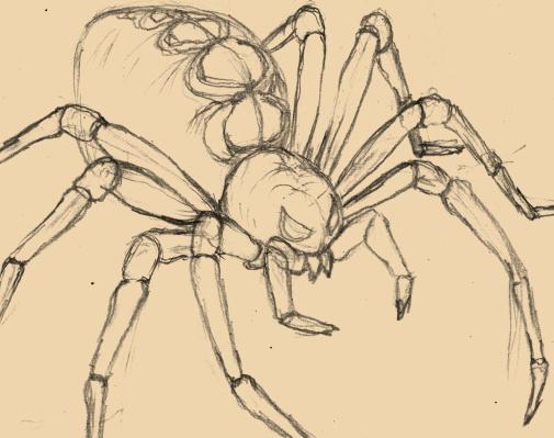 蜘蛛(クモ)のイラスト、デッサン