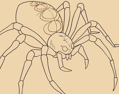 蜘蛛(クモ)のイラスト、線画