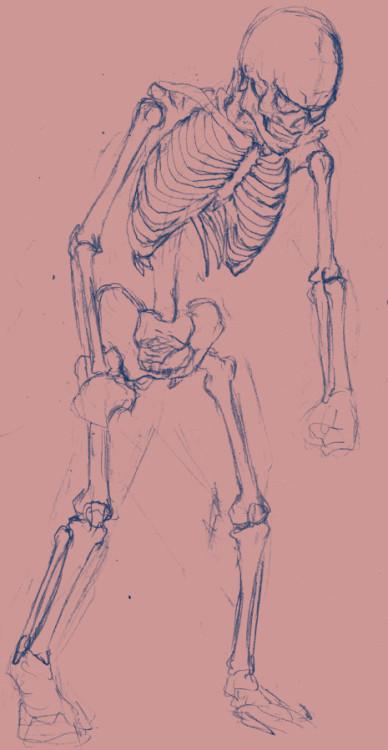 スケルトン下絵、肋骨